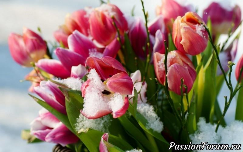 """Голосование по конкурсу """"Опять Весна, опять Цветы, опять сбываются Мечты!"""""""