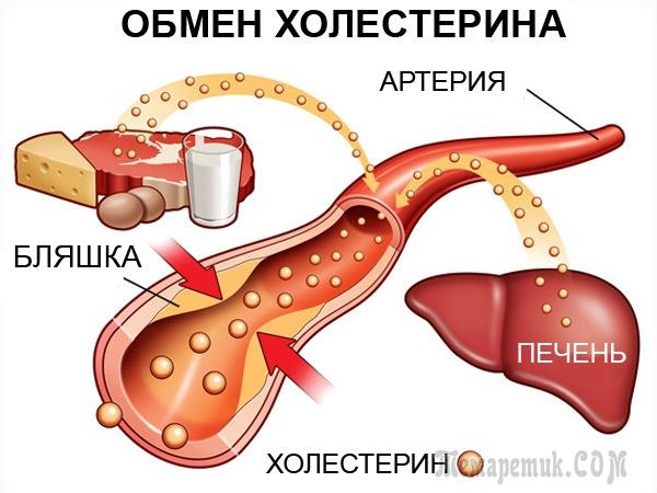 холестерин норма снижение