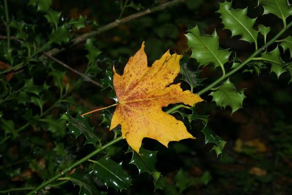 Для тех , кто любит осень и стихи .осенние