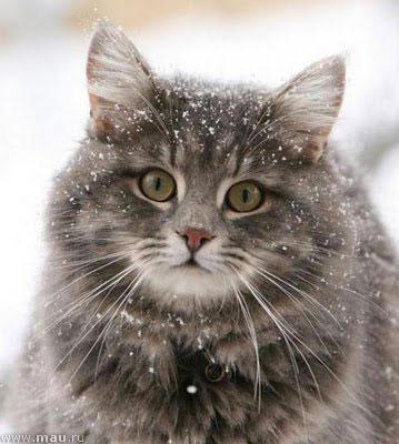 С днем кошек! Посвящаю всем пушистикам!