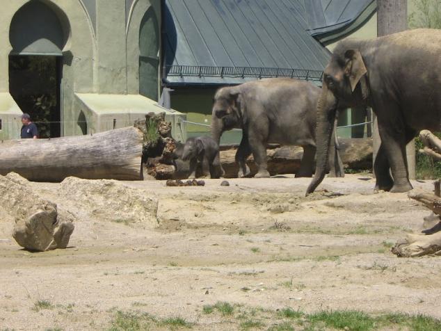 Зоопарк в Мюнхене