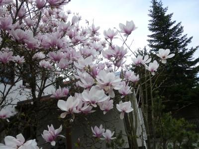 Картинки кусочек весны для тебя