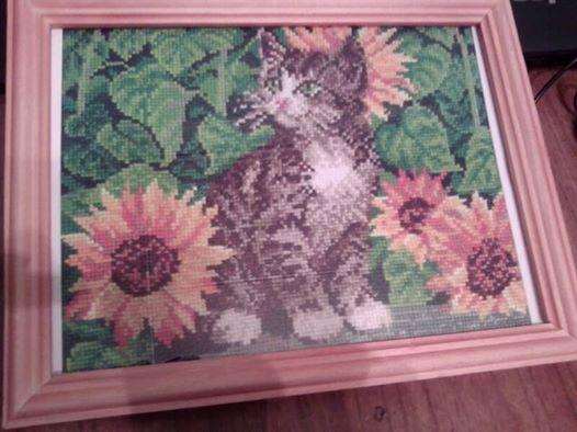 История котейки в подсолнухах