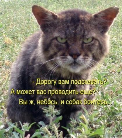 Яценюк просит Раду дать Антикоррупционному бюро право наказывать чиновников за ложь в декларациях - Цензор.НЕТ 905