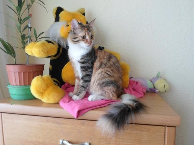 Если в доме кошка:))