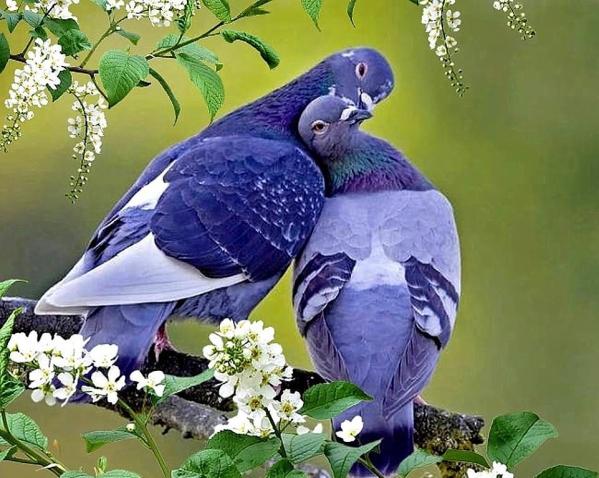 Красота и любовь неразделимы!