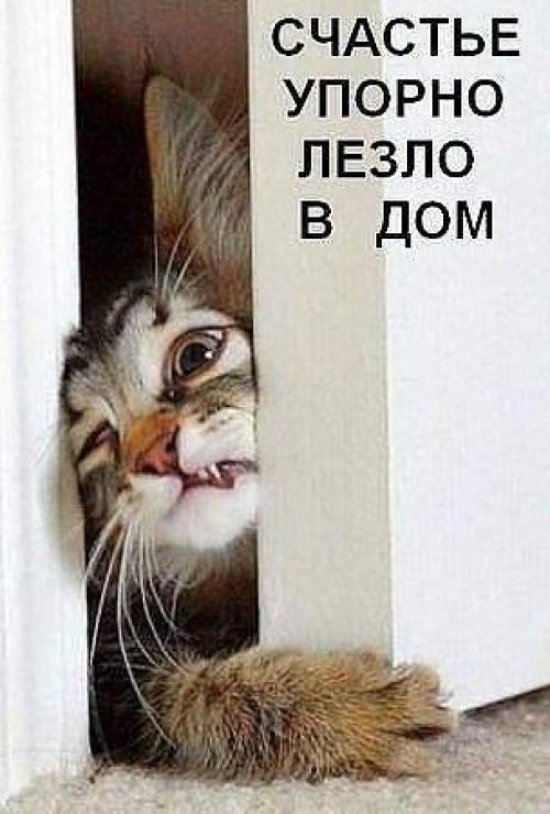 http://www.passionforum.ru/upload/042/u4230/1176/cf6a436a.jpg