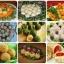 """4 .Закуска  """" Сырная """" 5 .Нарядные сырные шарики к праздничному столу 6. Крабовое рафаэлло 7 .Рисовые шарики с сыром 8..."""