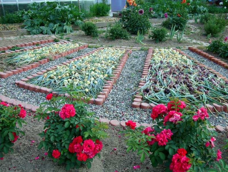 Цветы своими руками в огород