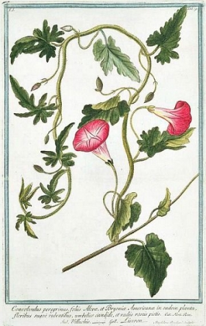 Ботаника 3