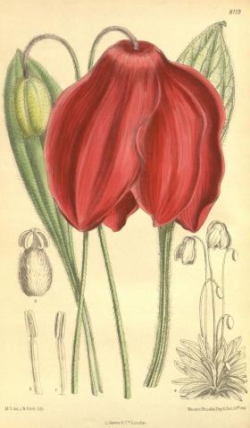 Ботаника 4