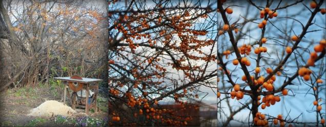 Осенние фотографии. Привет с Сахалина!