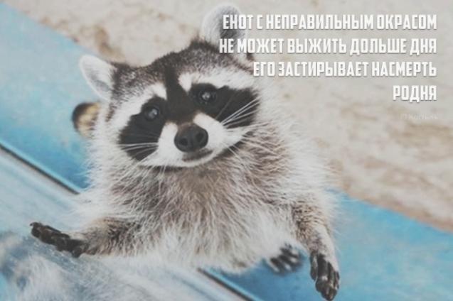 В жизни нужно быть непредсказуемым и коварным как...ОГУРЕЦ С ГОРЬКОЙ ПОПКОЙ!)))))