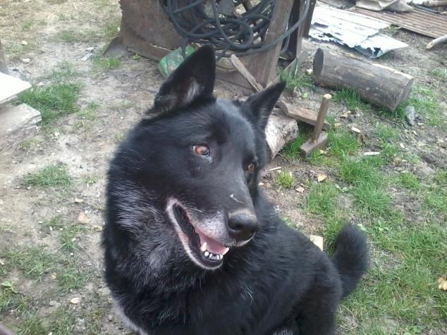 Помогите найти вышивку собаки