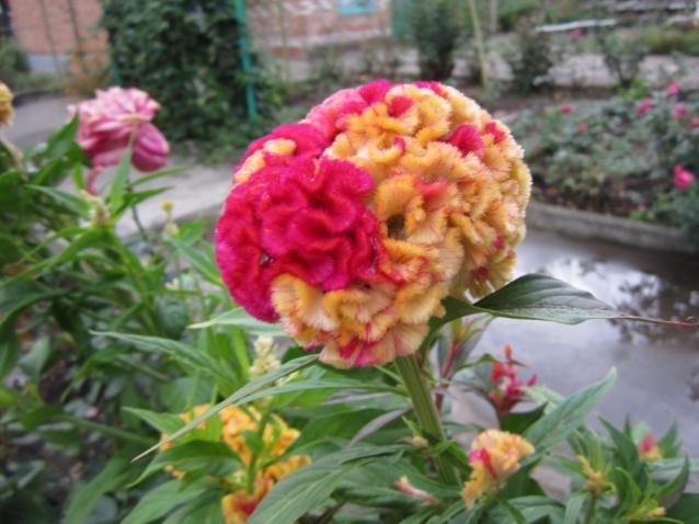 Августовские цветы