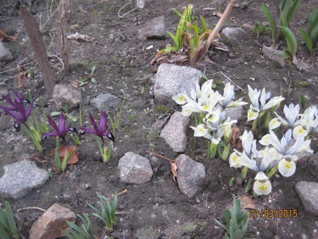 Цветы и снег