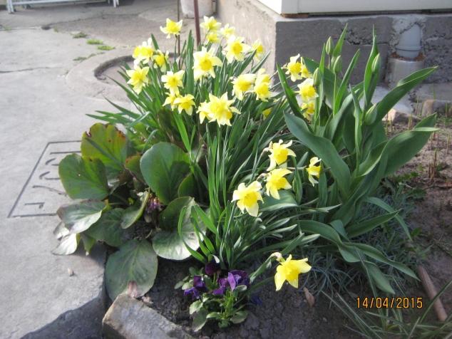 картинки моего сада