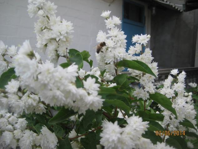 картинки моего сада часть 2 Кусты