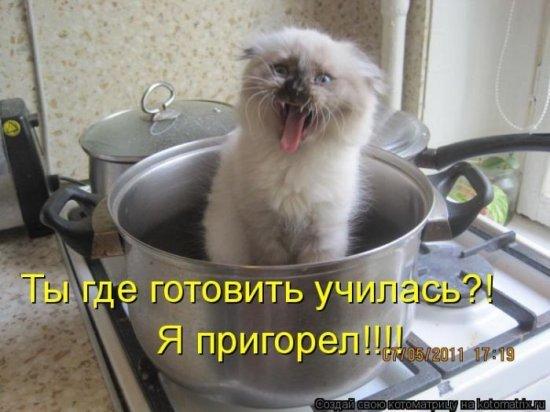 Коты, кошки и др.