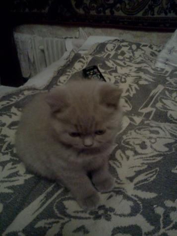 В гости на котят.