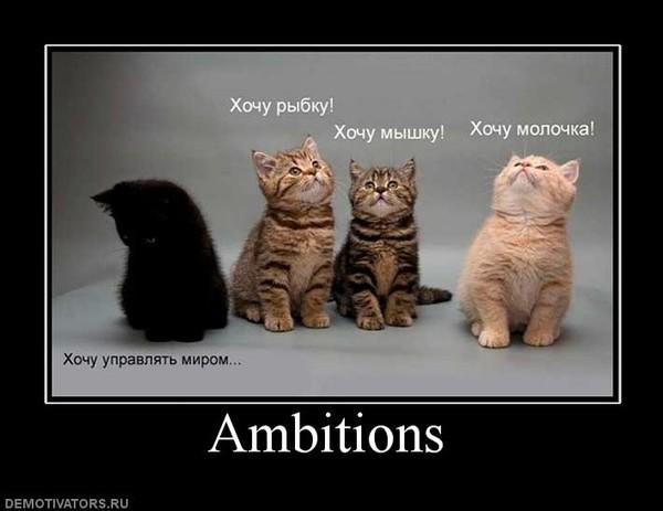 Коты, кошки и др. Продолжение.