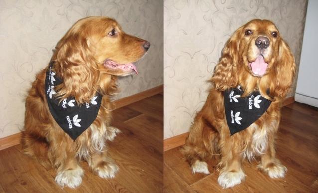 Стильный шейный платок для собаки. Мастер-класс