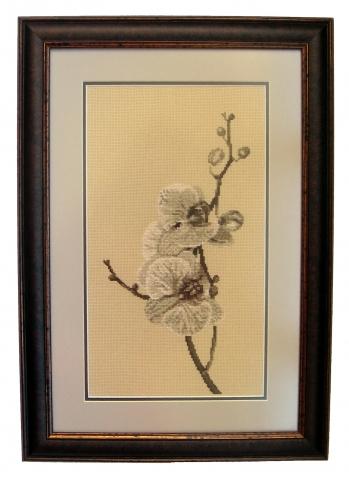 Мой фаленопсис, или Цветок японского изящества
