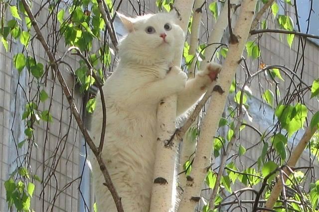 Как снять кота с дерева. Действенный способ