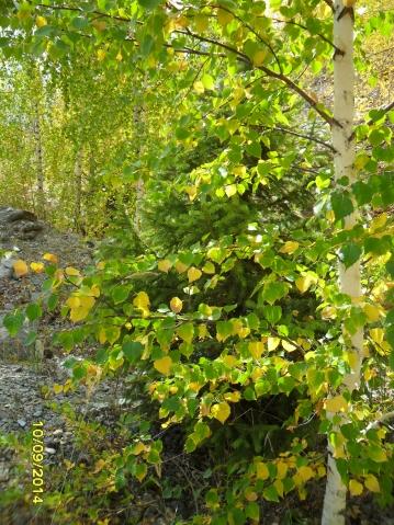 Сентябрь золотом листву окрасил ...или прогулка в горах.