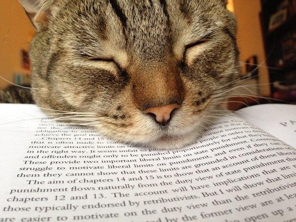 Дневник одного кота