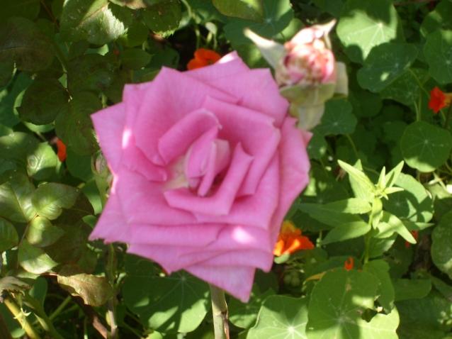 Приглашаю в летний сад. Часть 2.Как прекрасен этот мир,посмотри.