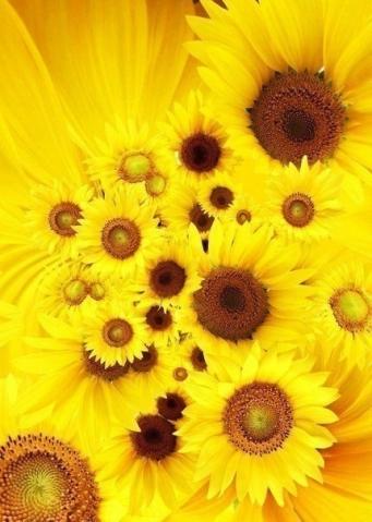 Пусть будут сегодня цветы и подарки