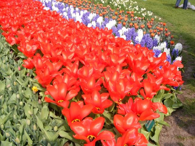 Койкенхоф. Голандия. Весна 2011.