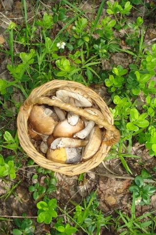 Первые грибочки или здравствуй лето!