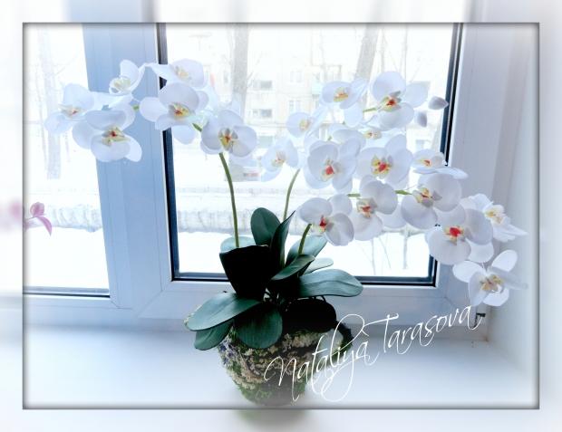 Орхидея фаленопсис.Фоамиран.