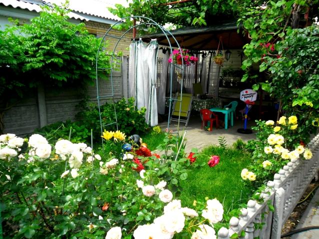Мой дворик фото цветы