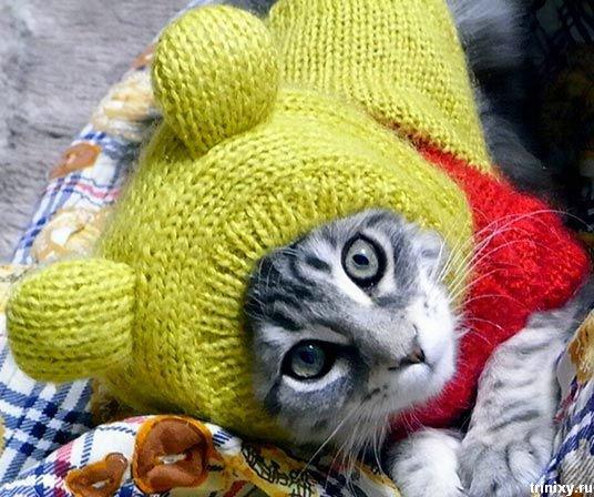 Осень - не повод грустить.. Осень, это повод носить шапочку)