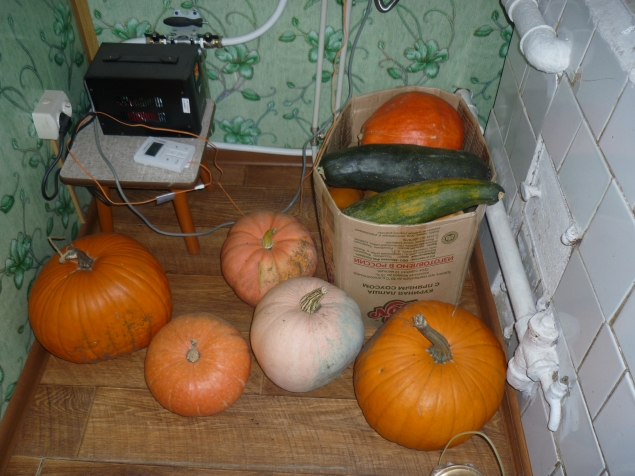 Хранение тыквы резаной в домашних условиях