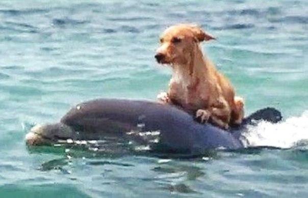 Собака и дельфины