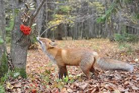 | | Загадки про сентябрь Пришла без красок и без кисти, да перекрасила все листья. (Осень.) Несу я урожаи, поля я убираю, птиц к югу отправляю, Деревья раздеваю, но не касаюсь елочек да сосен. Я .... (Осень.) Опустел колхозный сад, паутинки вдаль летят, И на южный край земли потянулись журавли. Распахнулись двери школ. Что за месяц к нам пришел? (Сентябрь.) Весной - веселит, летом - холодит, осенью - питает, зимой - согревает. (Дерево, лес.) Летом вырастают, а осенью опадают. (Листья.) Его весной и летом мы видели одетым. А осенью с бедняжки сорвали все рубашки. (Дерево.) Шел долговяз - в земле увяз. (Дождь.) Без рук, без ног, под окном стучит - в избу просится. (Ветер.) Сидит - зеленеет, лежит - пожелтеет, падает - почернеет. (Древесный лист.) Вверху зелено, внизу красно, в землю вросло. (Морковь.) Под землею птица гнездо свила, яиц нанесла. (Картошка.) Круглый бок, желтый бок, растет на грядке колобок. Врос в землю крепко. Что это? (Репа.) За кудрявый хохолок лису из норки поволок, На ощупь - очень гладкая, на вкус, как сахар, сладкая. (Морковь.) Как надела сто рубах, захрустела на зубах. (Капуста.) Он никогда и никого не обижал на свете. Чего же плачут от него и взрослые и дети? (Лук.) Закопали в землю в мае и сто дней не вынимали, А копать под осень стали - не одну нашли, а десять! (Картошка.) Он большой, как мяч футбольный! Если спелый - все довольны! Так приятен он на вкус! Это что? (Арбуз.) Удивительное солнце, в этом солнце сто оконцев, Из оконцев тех глядят сотни маленьких галчат. (Подсолнух.) Маленький, горький, луку брат. (Чеснок.) Вырастает он в земле, убирается к зиме. Головой на лук похож. Если только пожуешь Даже маленькую дольку - будет пахнуть очень долго. (Чеснок.) Как на нашей грядке выросли загадки – Крепкие, зеленые, хороши - соленые. (Огурцы.) Как на нашей грядке выросли загадки – Сочные да крупные, вот такие круглые. Летом зеленеют, осенью краснеют. (Помидоры.) А на этой грядке - горькие загадки. Тридцать три одежки, кто их раздевает - слезы п
