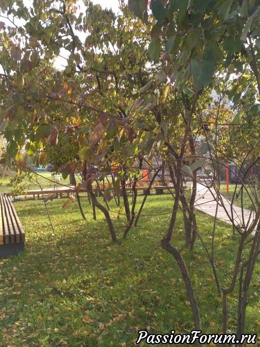 Уголок сиреневых деревьев