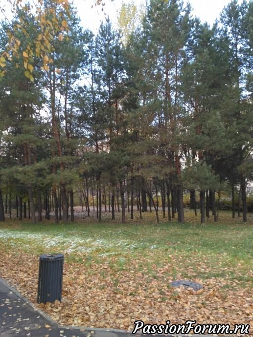 Здесь сосновый уголок деревьев