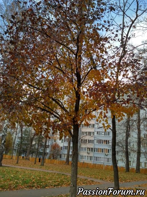 Рассматривали деревья