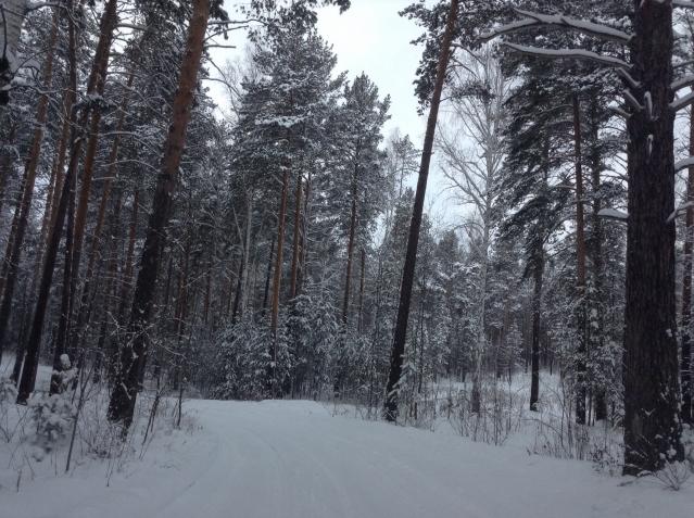 Зимний лес)