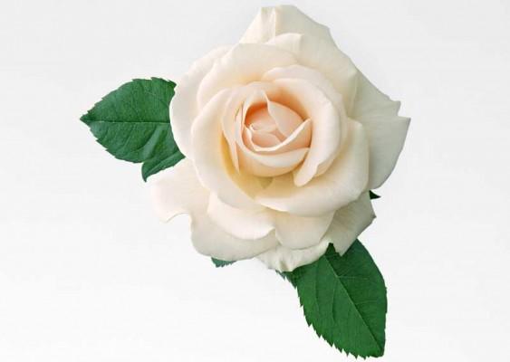 картинки цветиков
