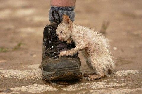 Он шел по улице и тихо плакал...