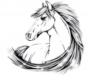 За основу я взяла из интернета рисунок лошади. Извините, но автора не знаю.