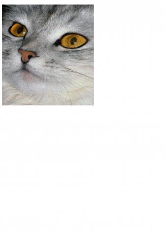 Серенький котик