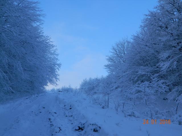 Прогулка по заснеженному лесу на г. Собер Баш 24.01.16г