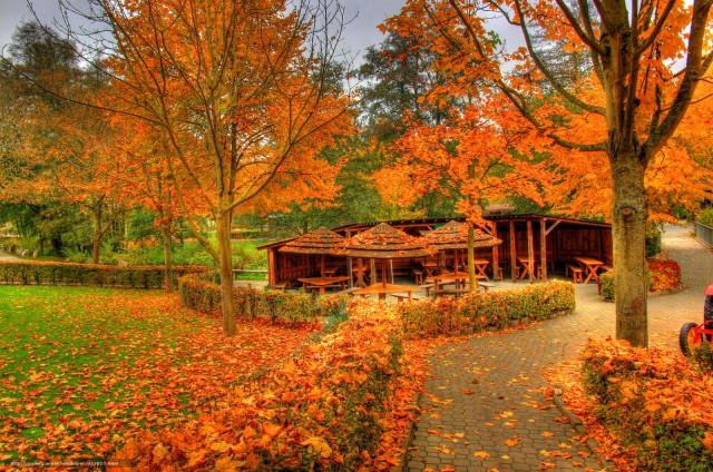 |      Такая грусть лишь в это время года... Господь не зря мгновенья выбирает, так засыпает осенью природа, но как она красиво засыпает!